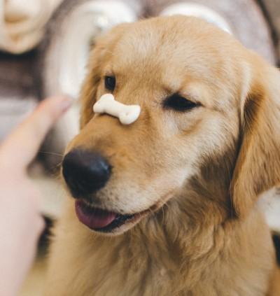 Dog with treat balancing on nose